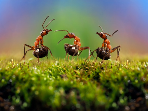 Click Here for Ant Prevention TIps