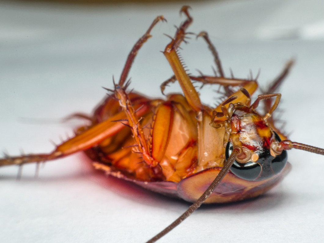 Keep Your Home Roach Free This Winter